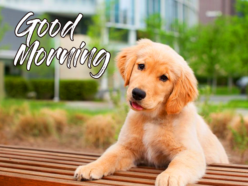 Modern Puppy Good Morning Wallpaper