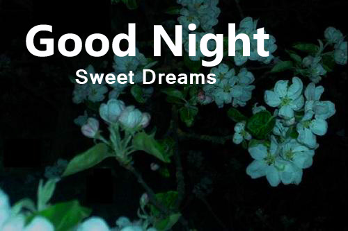 Night Flowers with Good Night Sweet Dreams Wish