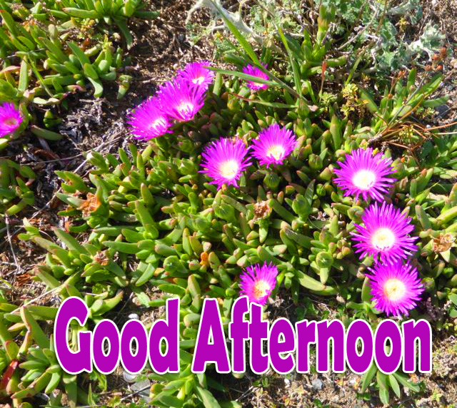 Noon Flowers Good Afternoon Image HD