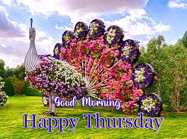 Peacock with Flowers and Good Morning Happy Thursday Wish