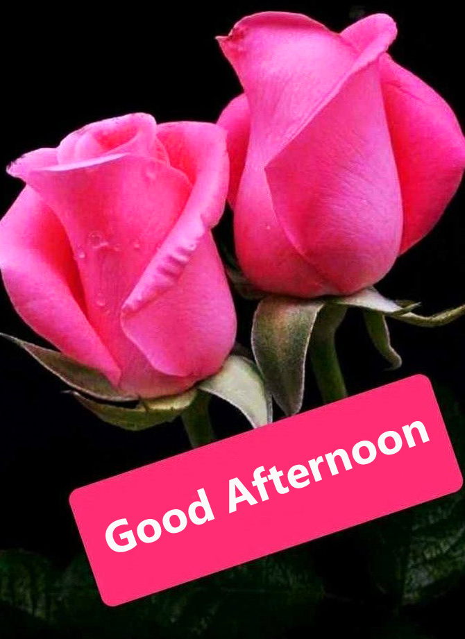 Pink Roses Good Afternoon Image