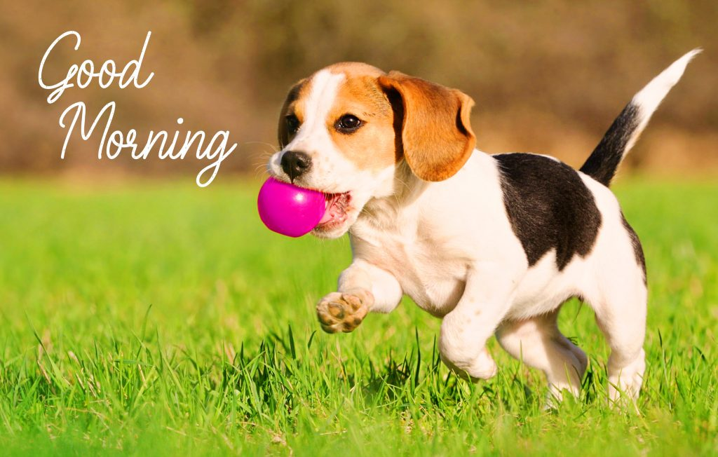 67+ Puppy Good Morning Wallpapers and Pics HD