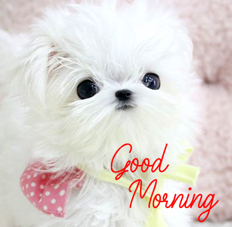 Puppy Good Morning Image HD