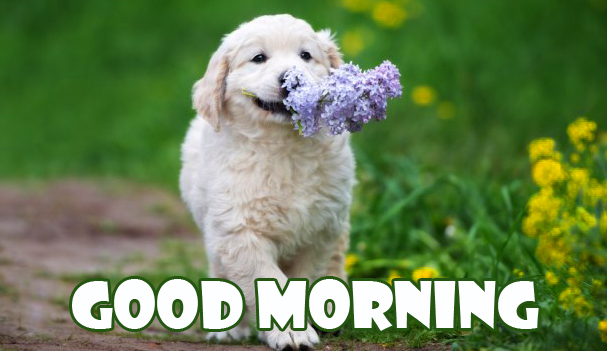 Puppy HD Good Morning Image