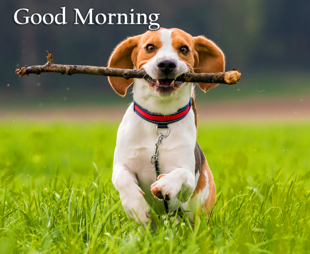 Puppy Over Green Good Morning Image