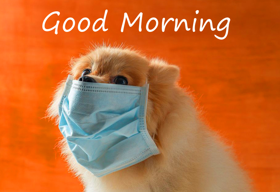Puppy Wearing Mask with Good Morning Wish