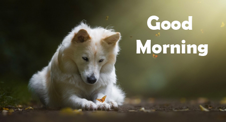 Puppy in Sunshine with Good Morning Wish