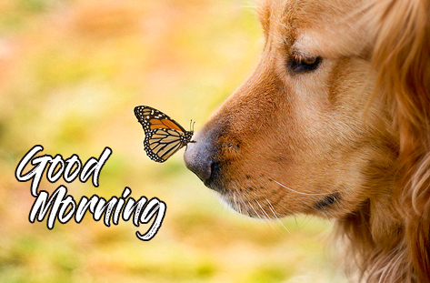 Puppy with Butterfly and Good Morning Wish
