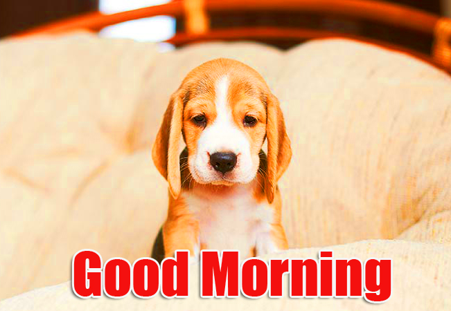 Puppy with Cute Good Morning Wish