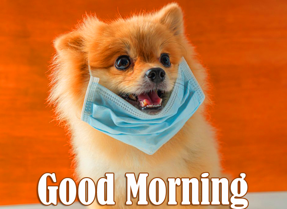 Puppy with Mask and Good Morning Wish