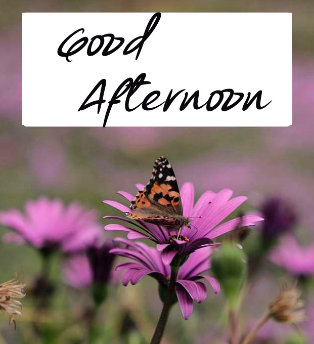 Purple Flower with Butterfly and Good Afternoon Wish