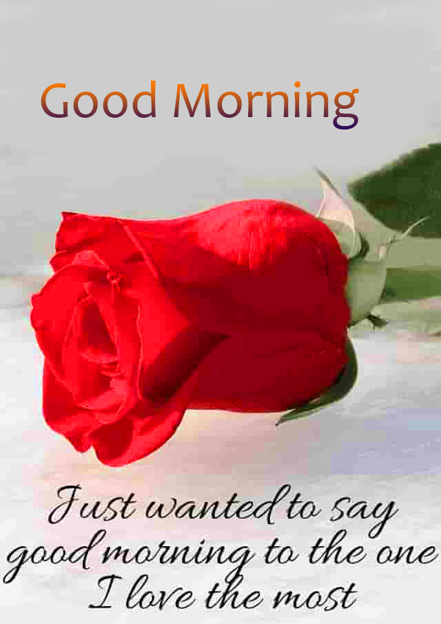 Quotes with Red Rose and Good Morning Wish