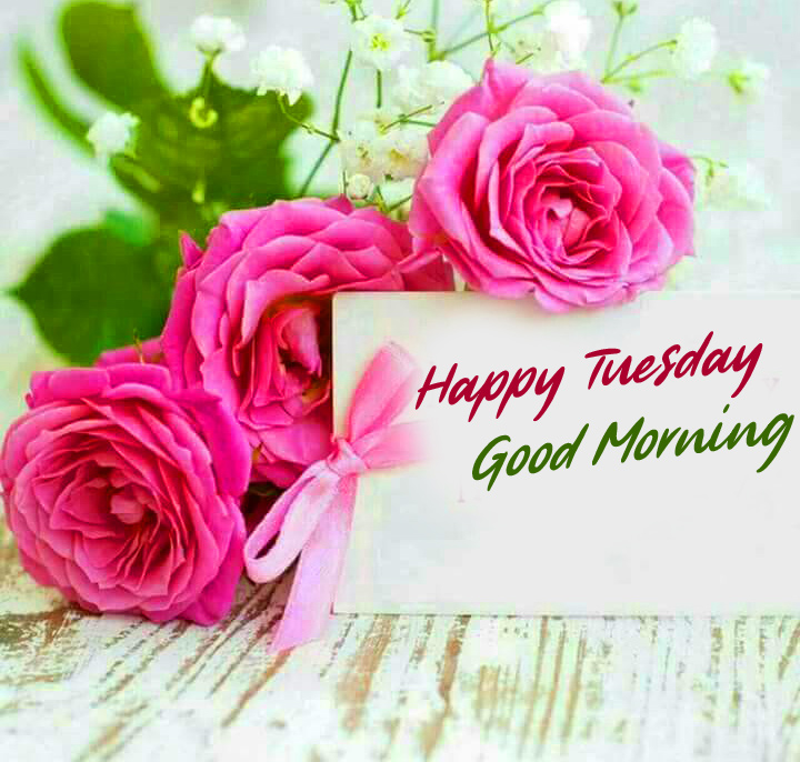 Roses Good Morning Happy Tuesday Image