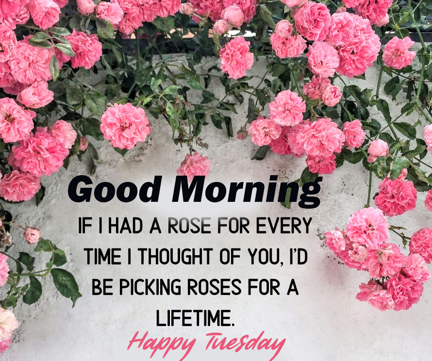 Roses Good Morning Happy Tuesday Quotes Image