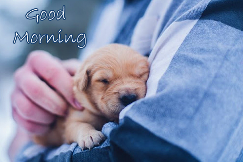 Sleeping Puppy with Good Morning Wish