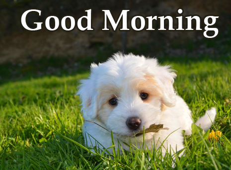 White Cute Puppy Good Morning Image HD