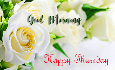 White Roses with Good Morning Happy Thursday Wish