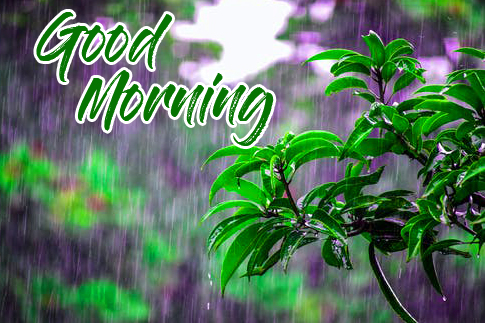 Beautiful Good Morning Rainy Pic