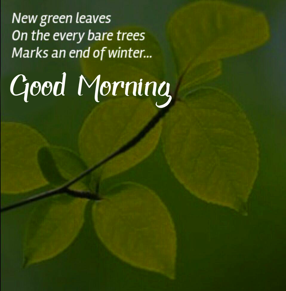 Beautiful Leaf Quotes Good Morning Wallpaper