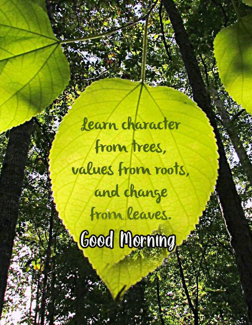 Beautiful Leaf with Quotes and Good Morning Wish