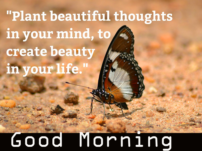 Beautiful Positive Quotes Good Morning Picture HD