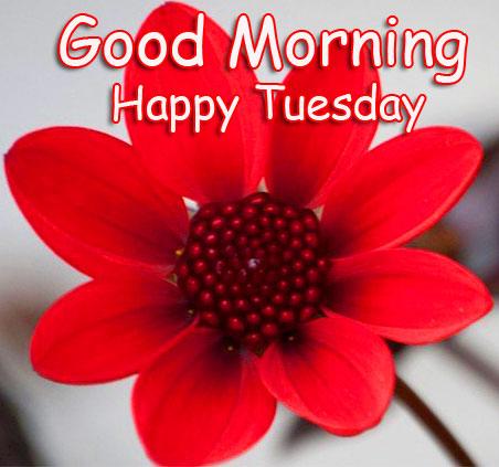 Blooming Red Flower Good Morning Happy Tuesday Photo
