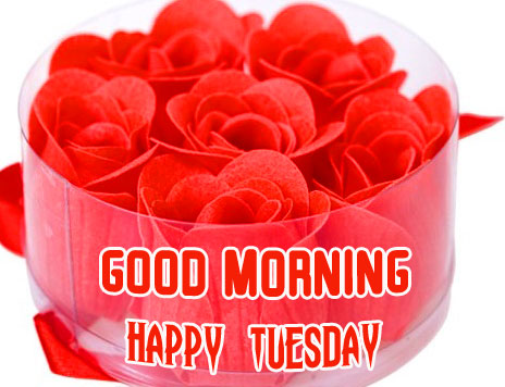 Blooming Red Roses Good Morning Happy Tuesday Image