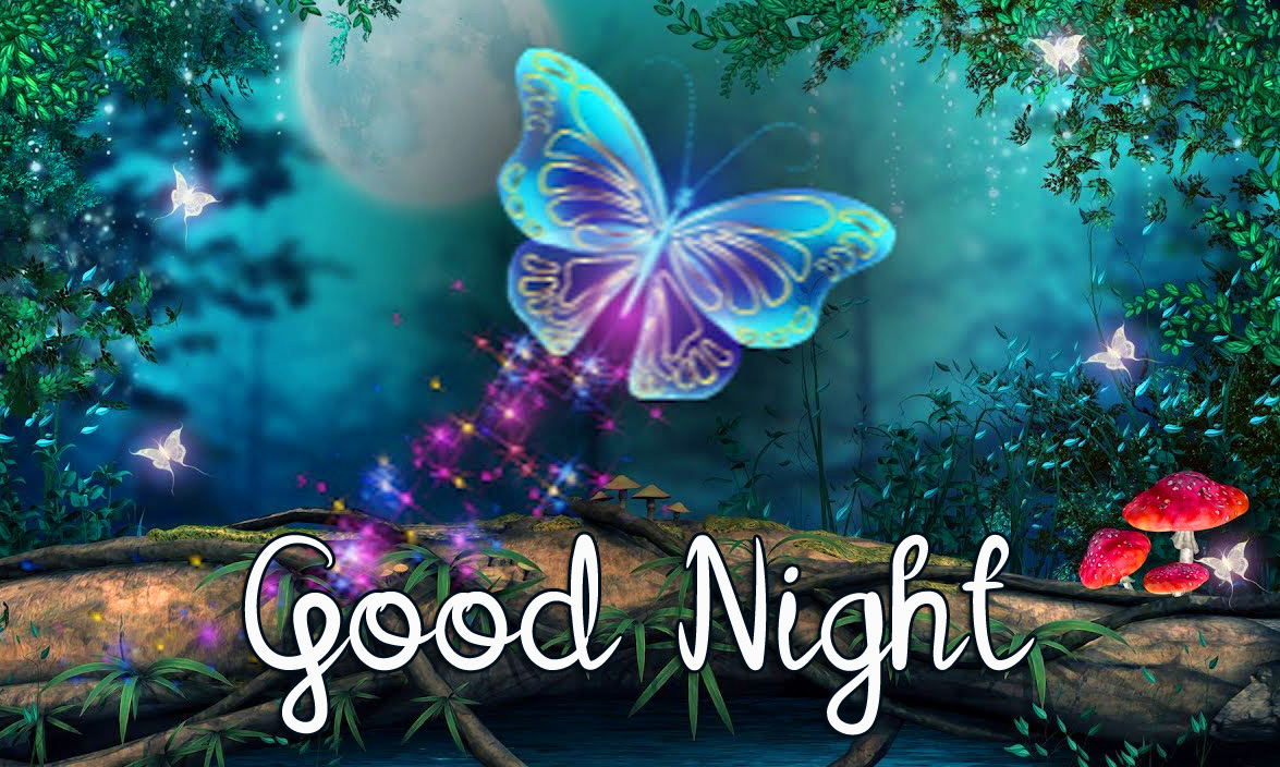 Bright Butterfly Good Night Image HD