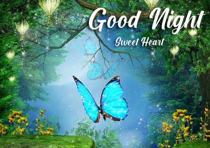 Butterfly Scenery Good Night Image