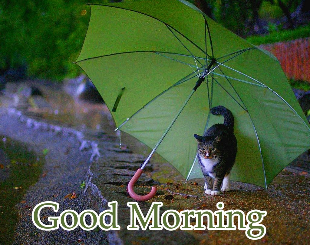41+ Good Morning Rainy Images