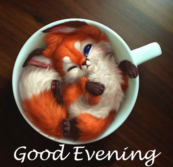 Cute Animal in Cup with Good Evening Wish