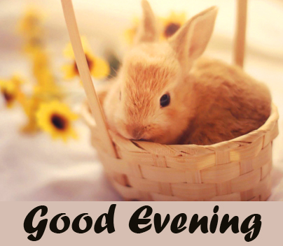 Cute Bunny in Basket Good Evening Image