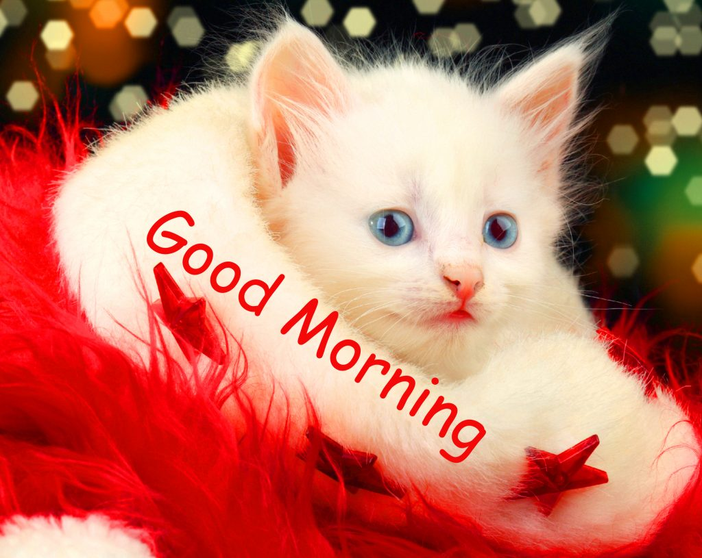 41+ Good Morning Images Hd 1080p Download