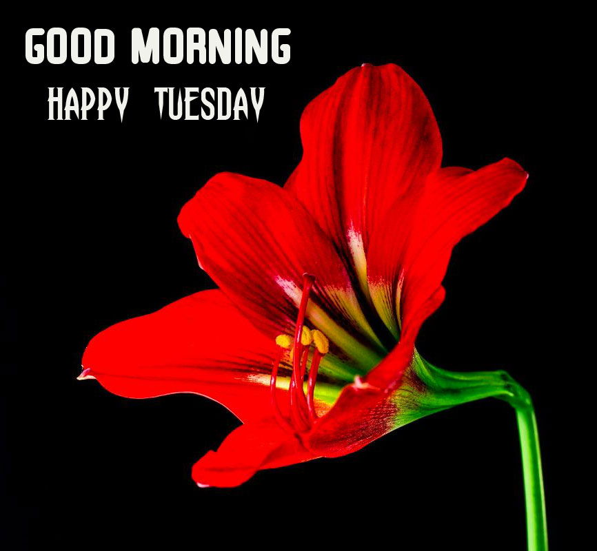Flower Good Morning Happy Tuesday Image