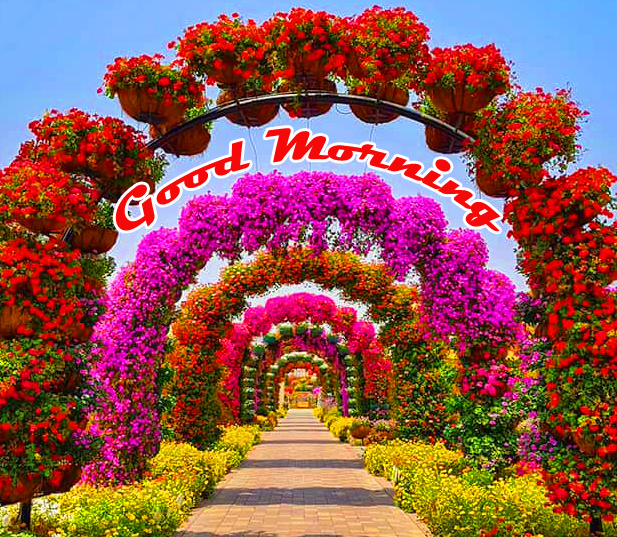 Flowers Decoration with Good Morning Wish