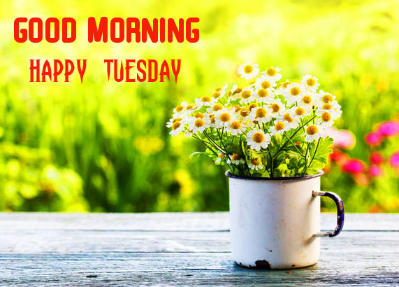 Flowers Pot Good Morning Happy Tuesday Pic