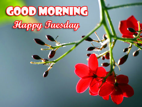 Flowers Red Good Morning Happy Tuesday Image