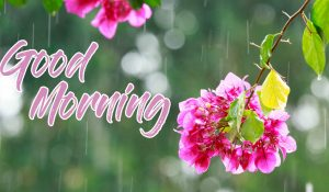 Flowers with Good Morning Rainy Pic