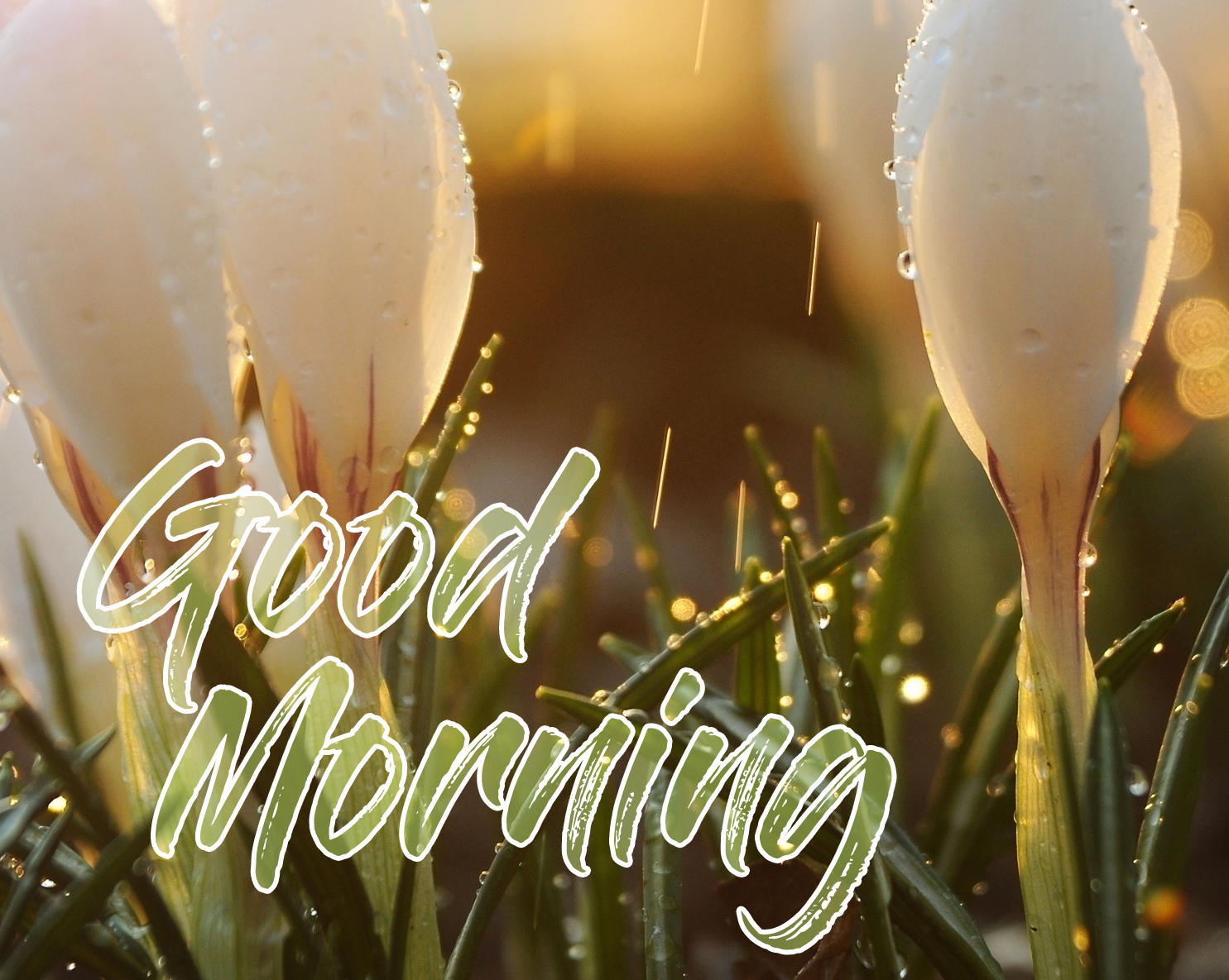 Flowers with HD Good Morning Rainy Pic