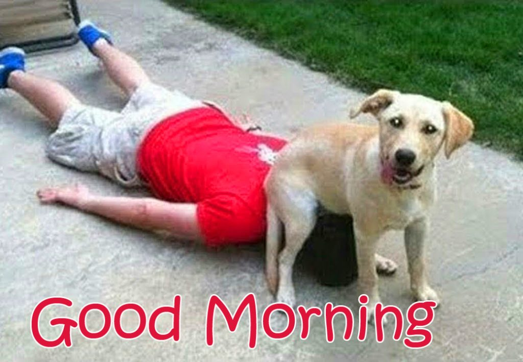 50+ Best Comedy Good Morning Images, Wallpapers and Photos (Latest Updates)