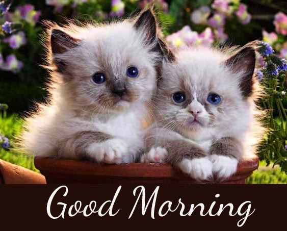 Funny Kittens Good Morning Picture