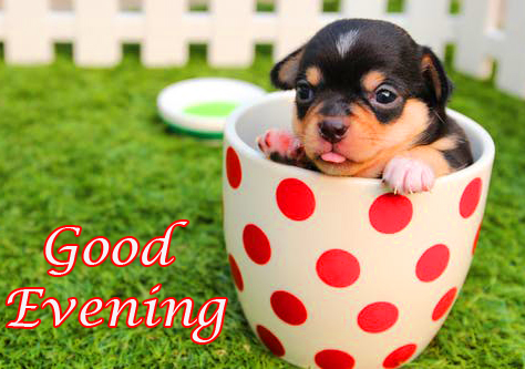 Good Evening with Cute Dog