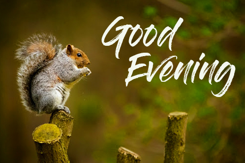 Good Evening with Cute Squirrel Pic