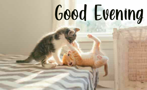 Good Evening with Funny and Cute Kittens Image
