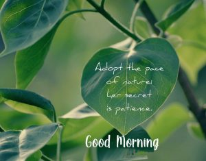 Good Morning Beautiful Green Quotes Picture