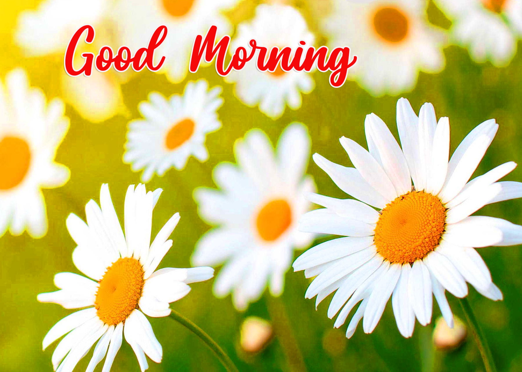 Good Morning Flowers Pic Pix Trends