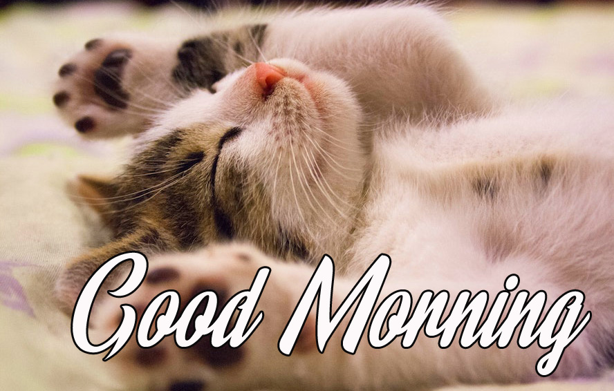 Good Morning Funny Cat Picture