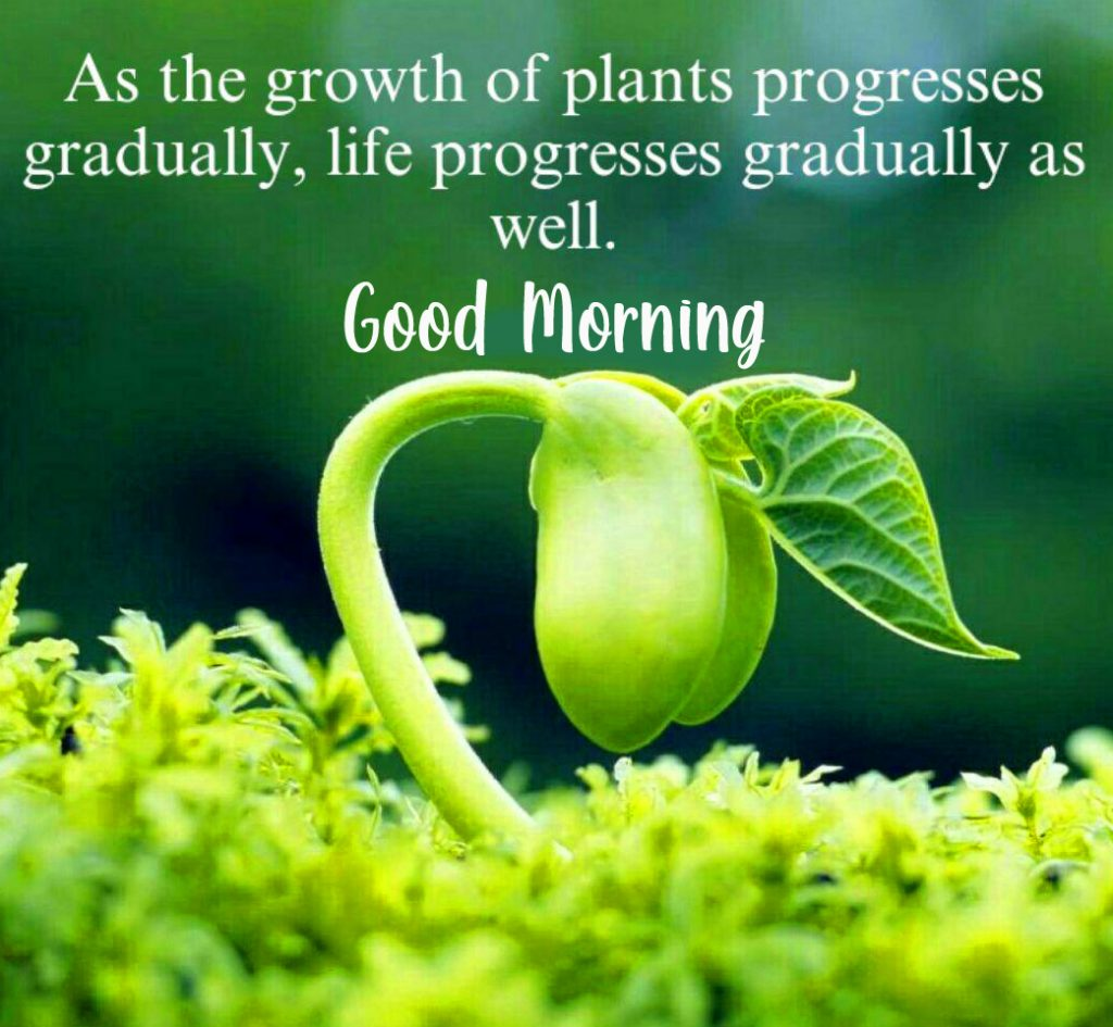 49+ Leaf Quotes with Good Morning Wish and Message (Free Download)