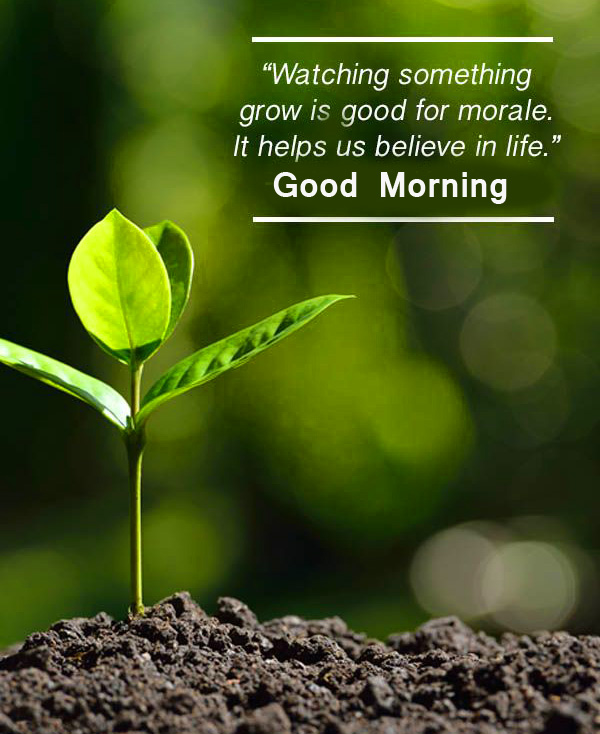 Good Morning Green Quotes Photo