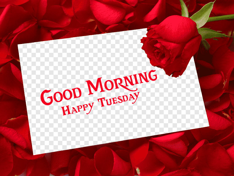 Good Morning Happy Tuesday Card with Red Rose and Petals